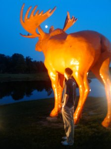 Giant Orange Moose